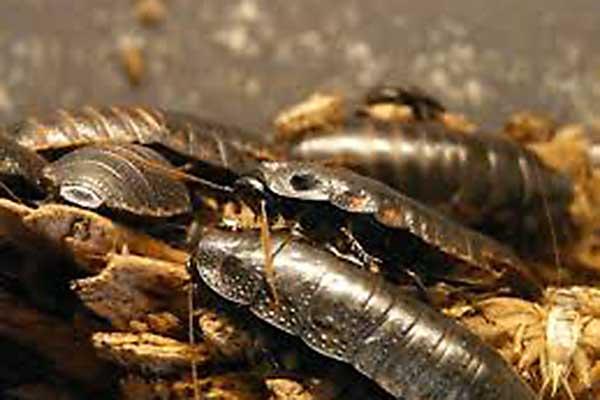Много тараканов во сне
