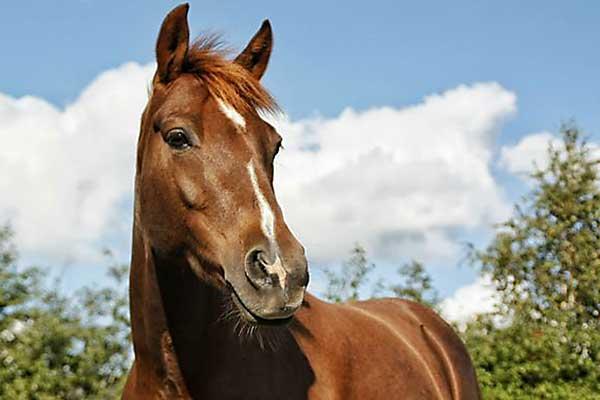 К чему снится белая лошадь женщине сонник