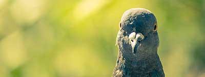 Сонник Птицы. К чему снятся Птицы во сне женщине и мужчине