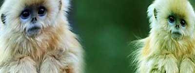 К чему снится обезьяна женщине и мужчине
