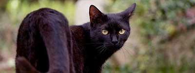 К чему снится черная кошка женщине и мужчине сонник
